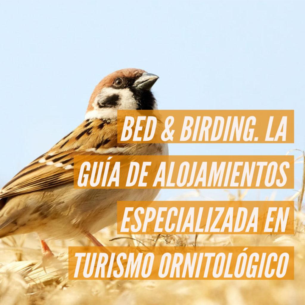 bid and birding 1024x1024 - Bed & Birding, la guía de alojamientos especializada en turismo ornitológico