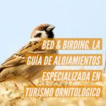 bid and birding 150x150 - Bed & Birding, la guía de alojamientos especializada en turismo ornitológico