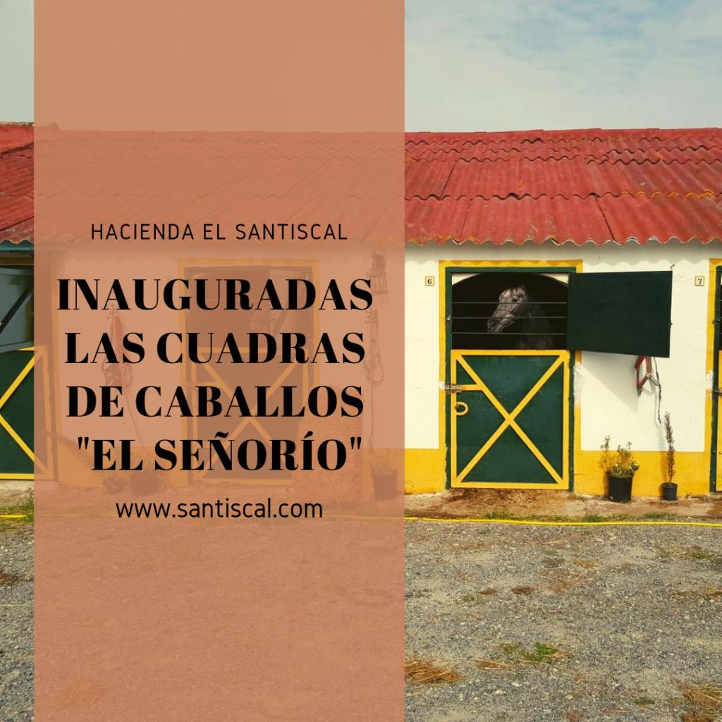 """caballo hotel hacienda el santiscal 1024x1024 - Inauguradas las Cuadras de caballos """"El Señorío"""""""