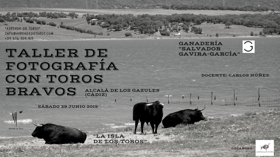 Taller Fotografía con toros Gavira 29.06.19 - Taller de Fotografía con Toros Bravos