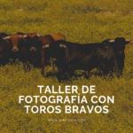 Taller de Fotografía con Toros Bravos 150x150 - Taller de Fotografía con Toros Bravos