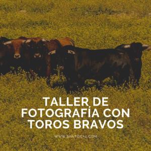 Taller de Fotografía con Toros Bravos 300x300 - Inicio