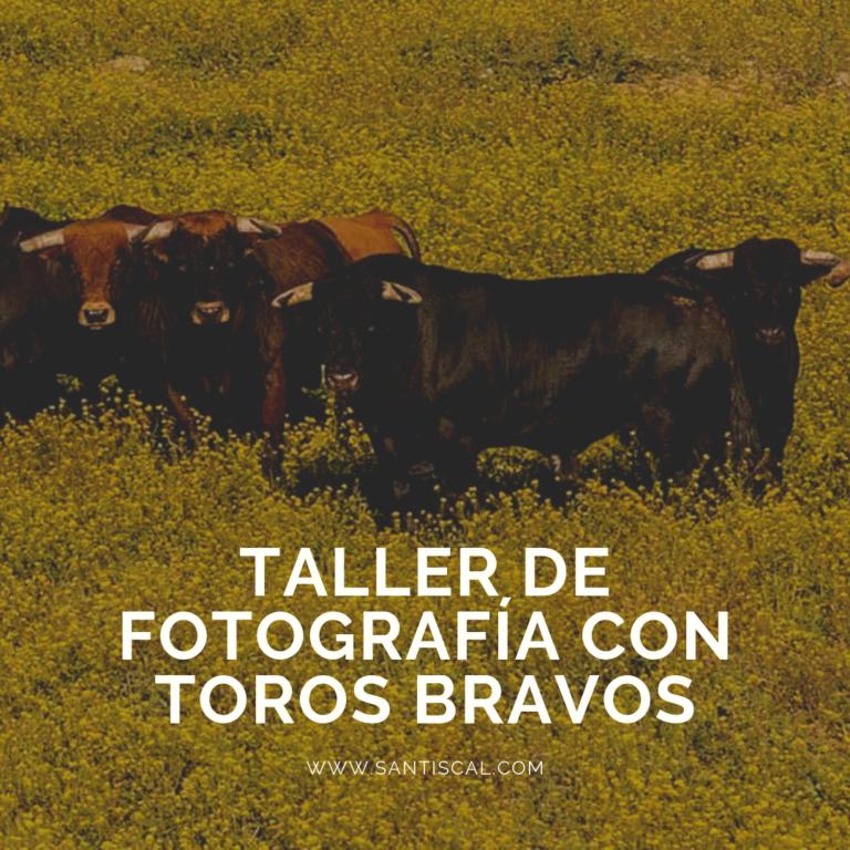Taller de Fotografía con Toros Bravos 768x768 - Inicio